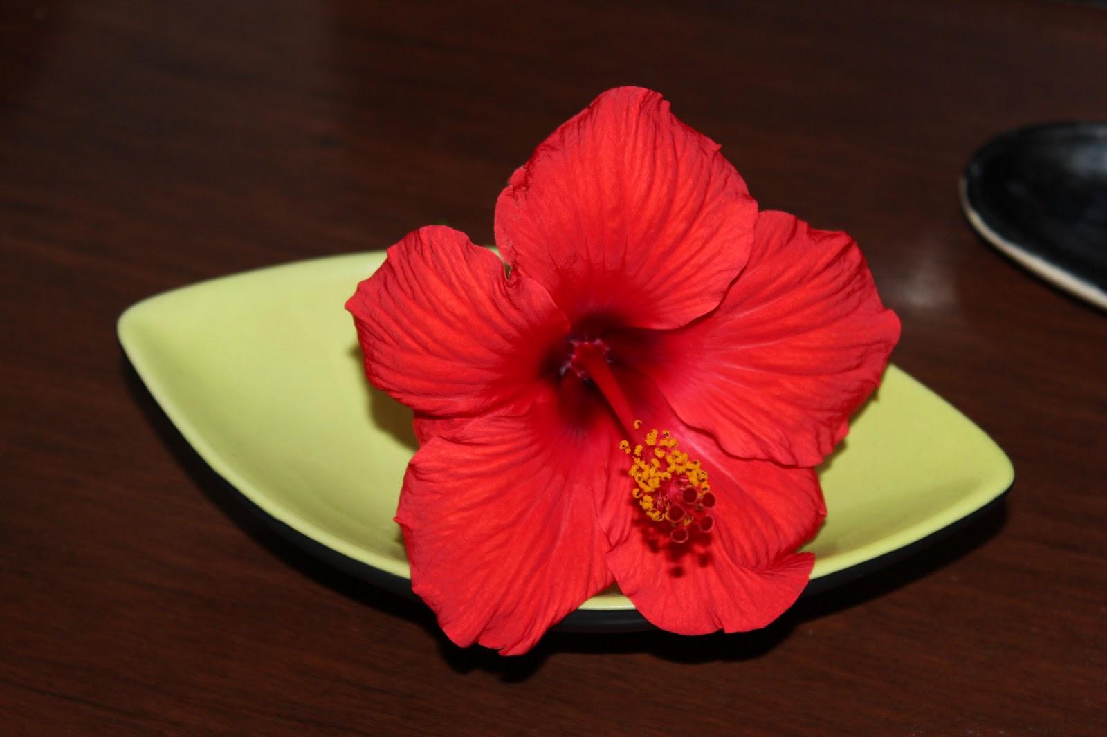 Florez nursery hibiscus rosa sinensis general corteges hibiscus rosa sinensis general corteges izmirmasajfo