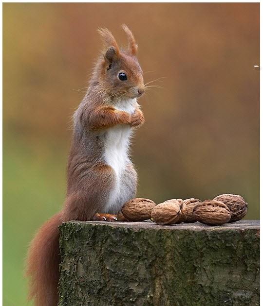 Cute Squirrels doing cute things