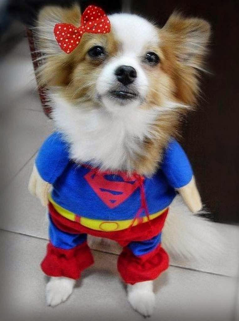 Super man outfit for small dogs