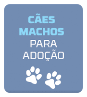 http://tombalatascuritiba.blogspot.com.br/search/label/Machos%20para%20Ado%C3%A7%C3%A3o