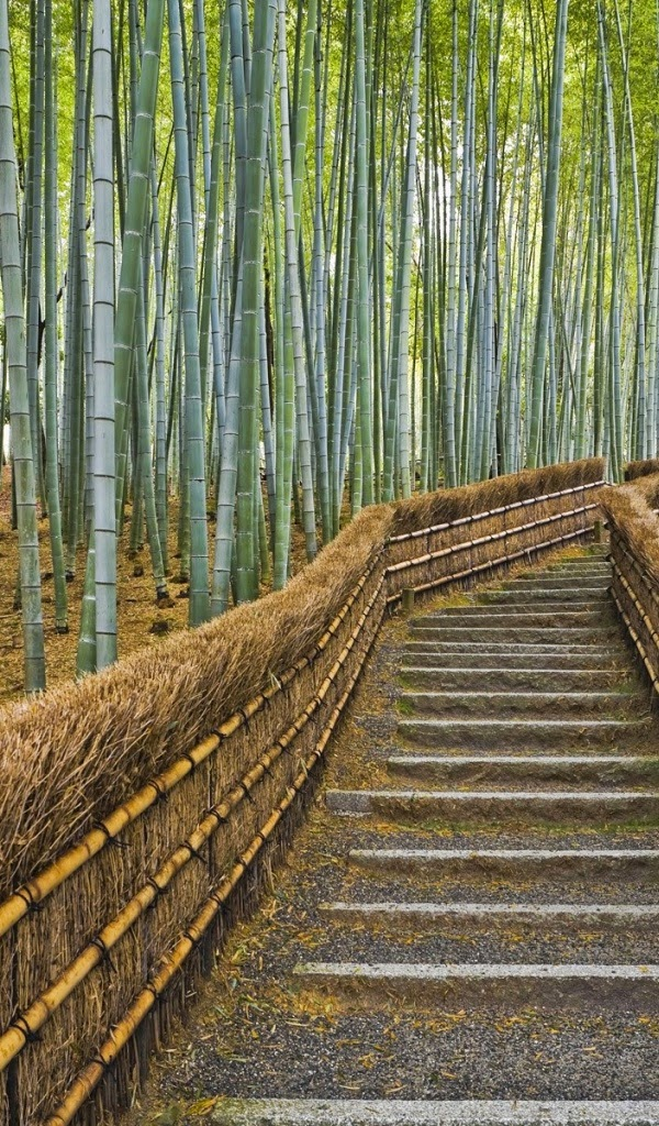 Amazon Kindle Fire Bamboo Forest Wallpapers