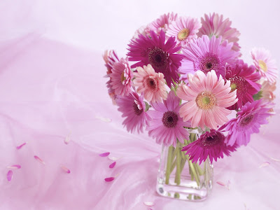 Flowers Normal Resolution Wallpaper 10
