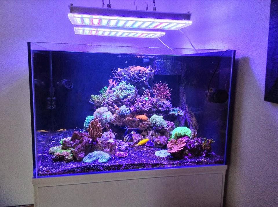 led lampe aquarium inspirierendes design. Black Bedroom Furniture Sets. Home Design Ideas