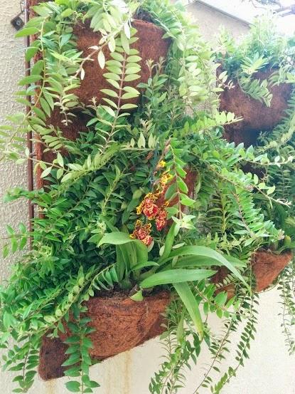 plantas de jardim lista:365 dias com a Villa Pano: CEAGESP para o Jardim
