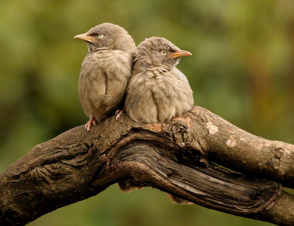 Minik kuşlar