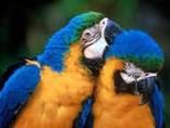 Todas las especies interactúan entre si, con otras especies y con el medio.