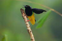 Bird-of-paradise Picture and Photo 17