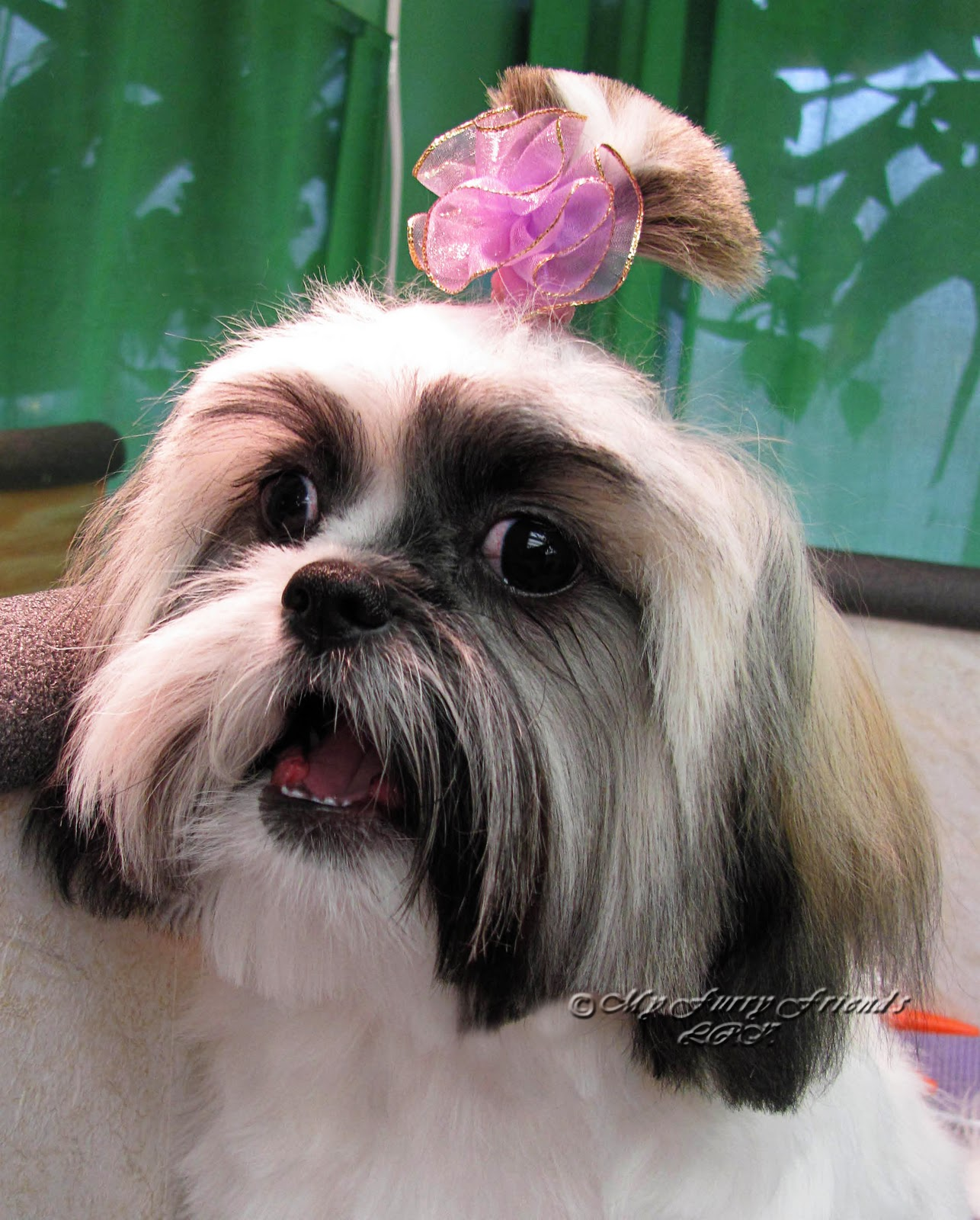 how to cut shih tzu hair at home with scissors