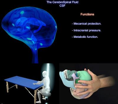 Anatomía del Cráneo y del cerebro - Recomendado para Terapia Cráneo-sacra (Recopilación de Vídeos) - Parte 3