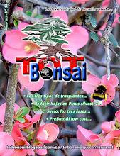 DR 12 TOT Bonsai