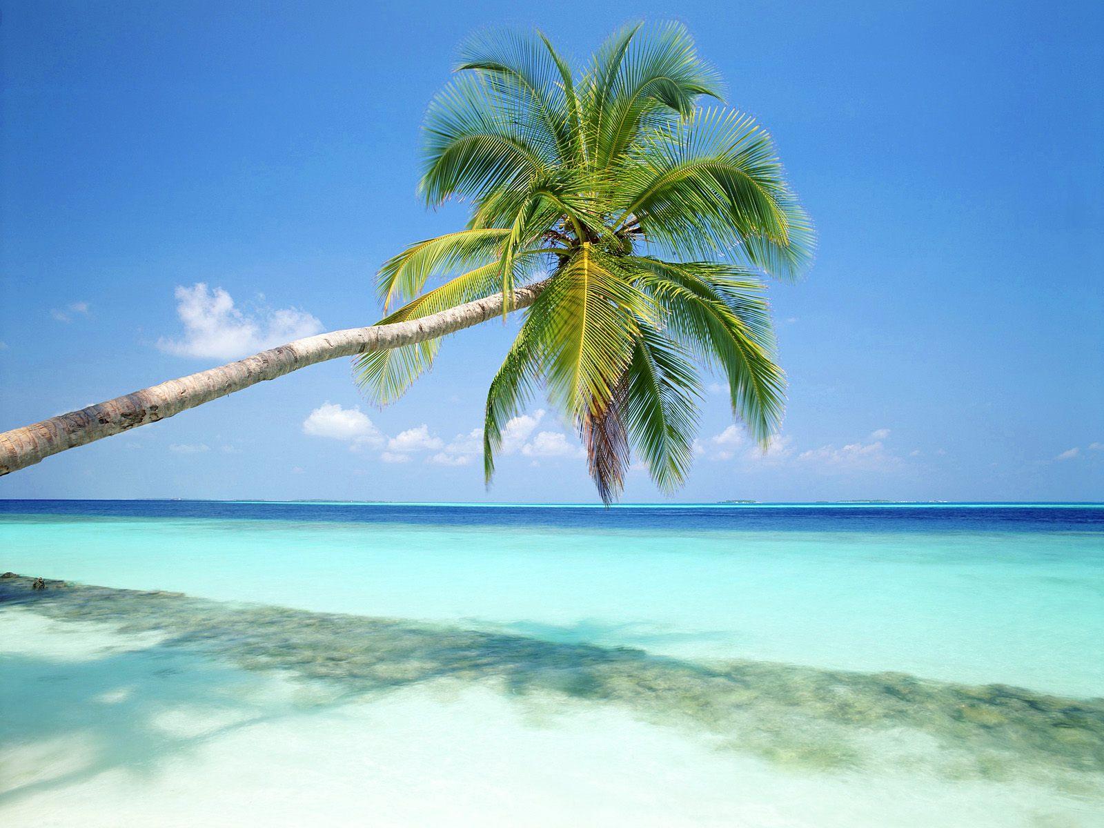 http://1.bp.blogspot.com/-3--VCan3Em0/Tec9QWaRTlI/AAAAAAAAADs/F0qrlgcVlSY/s1600/Tropical_Island_Maldives%255B1%255D.jpg