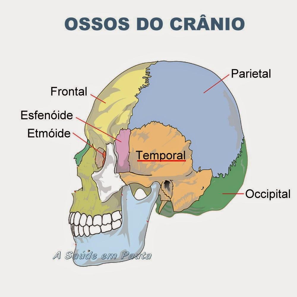 Nomes e localização dos ossos do crânio