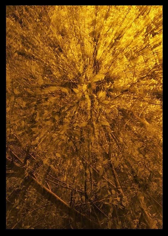 A l'intérieur de l'arbre 1