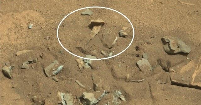 Marte: fotografato un osso animale nel pianeta rosso