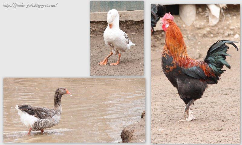 знакомство с птицами во время прогулки