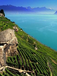 Vineyards,Lake Geneva, Switzerland