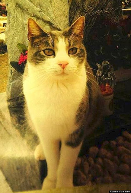 Toldo Kucing Italia Paling Setia