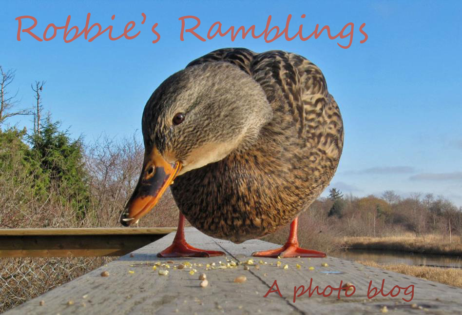 Robbie's Ramblings