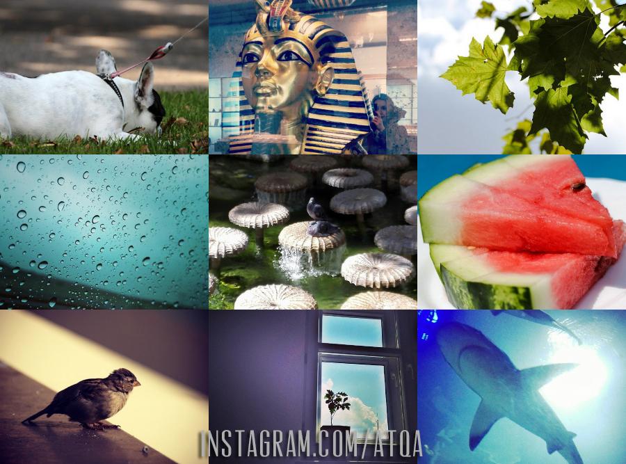instagram.com/atqa
