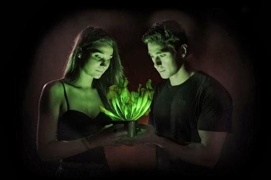 planta que brilla en la oscuridad
