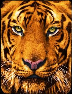 Jual Selimut Kendra Soft Panel Blanket Tiger