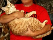 blog śmieszne koty duze koty
