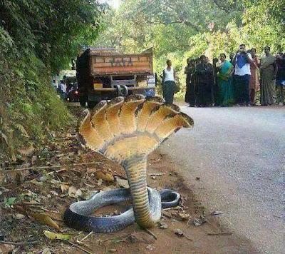 serpiente de varias cabezas