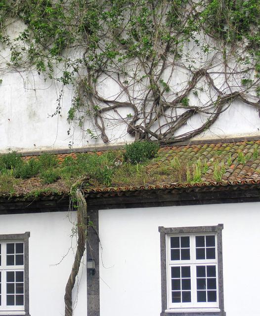 Green home roof