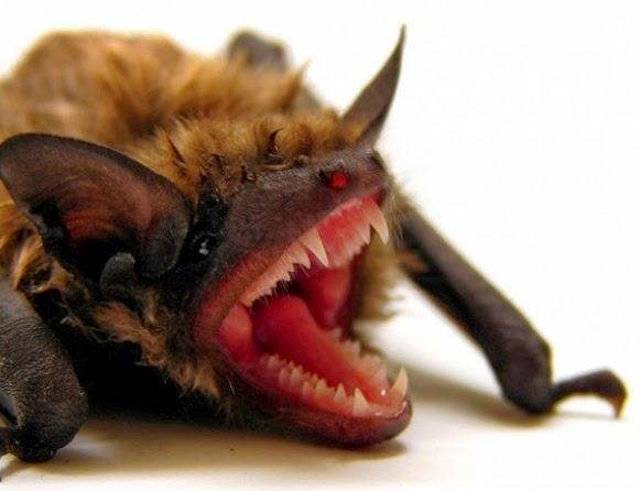O calor provoca chuva de morcegos veja vídeo