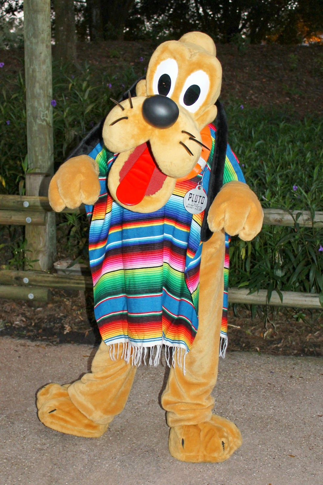 Pluto Halloween Disney Character Hunt Mickey's Backyard Barbeque Fort Wilderness