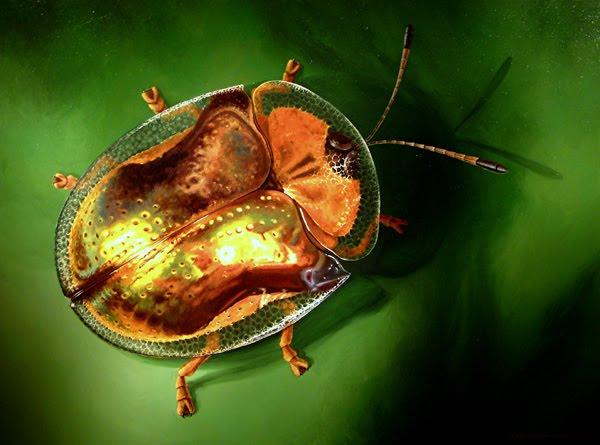 Blog Medioambiente.org : Escarabajos tortuga, un universo de colores ...