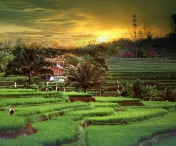 World Of Sciences Pertanian Dan Perkebunan