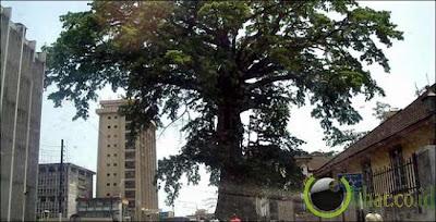 Pohon-Pohon Paling Keramat di Dunia