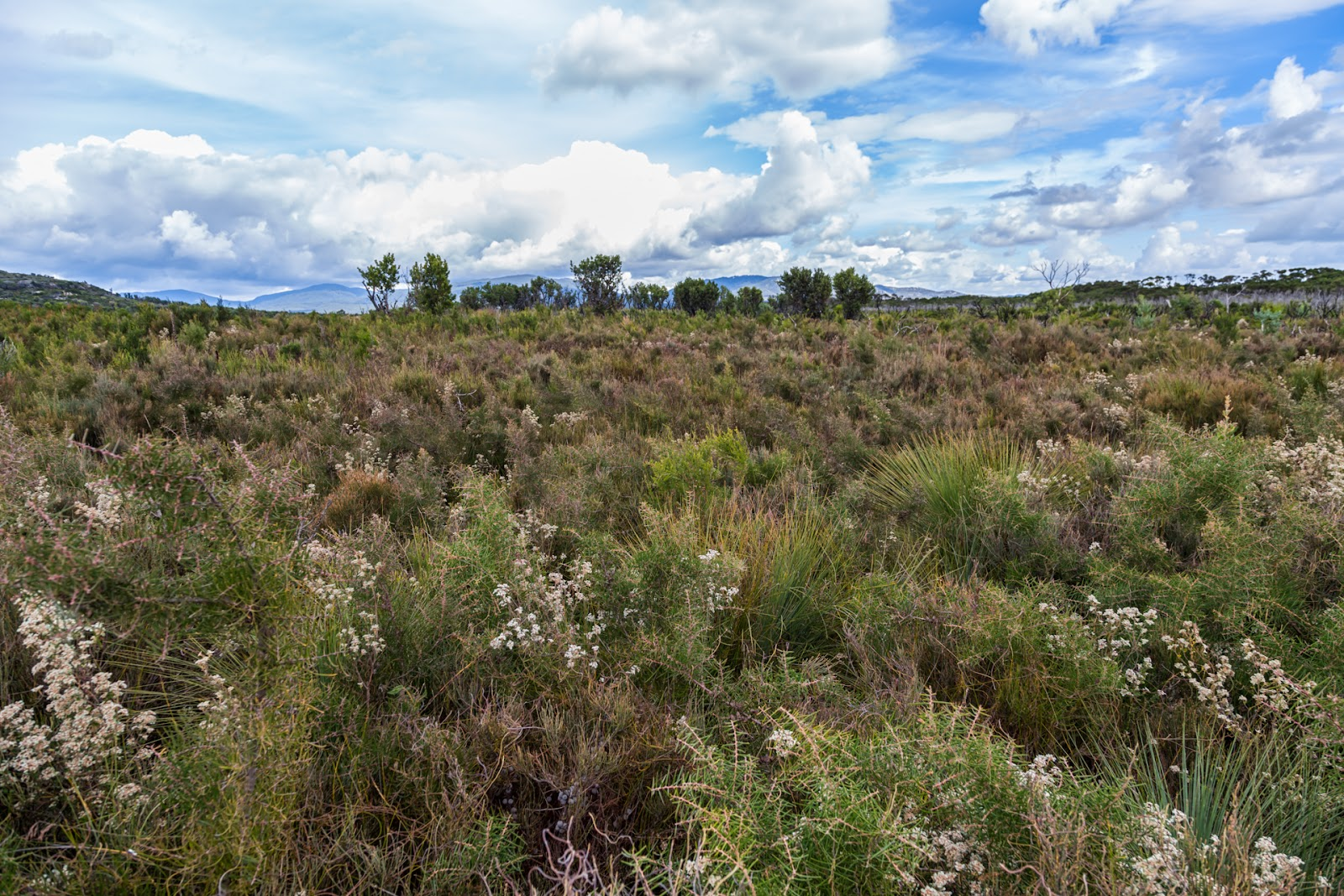 scrub wilderness northern wilsons promontory