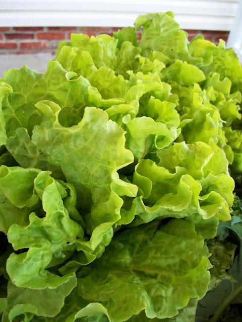 green head lettuce