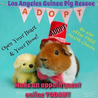 L.A. Guinea Pig Rescue