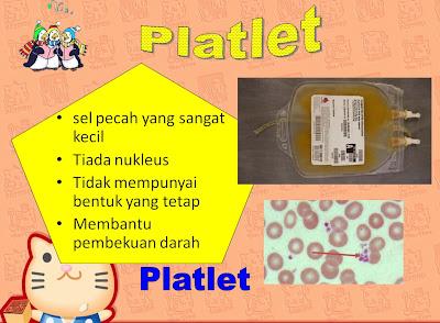 kandungan darah manusia : platlet