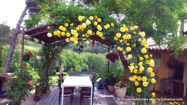 моя гордость-желтая роза