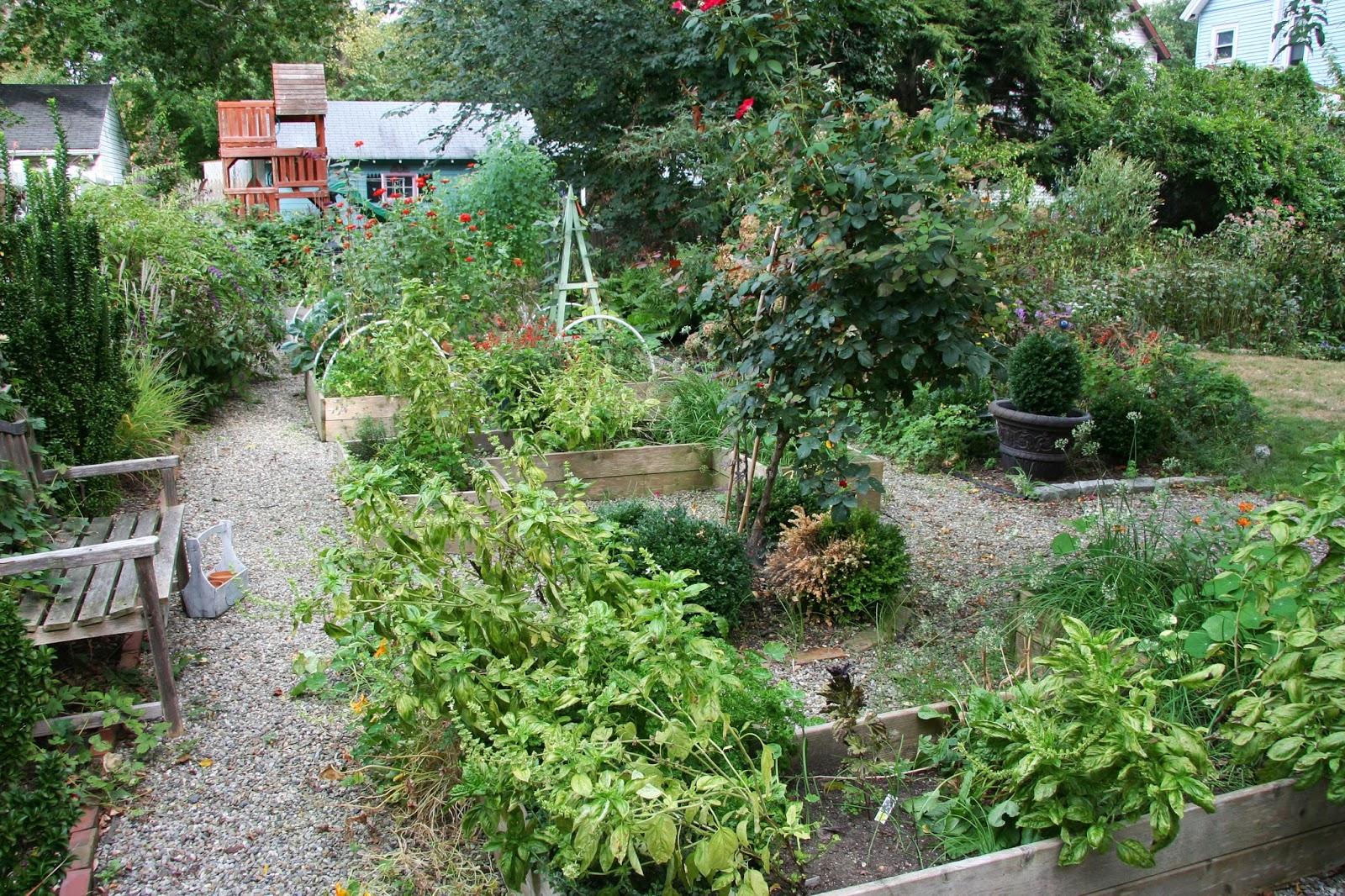 My Kitchen Garden Daffodils Daydreams My Kitchen Garden In September 2015