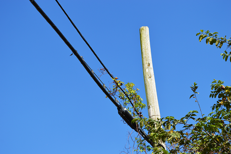 telephone pole covered in vines