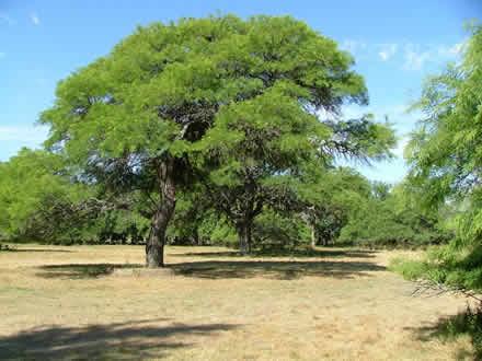 Agroindustrias 2