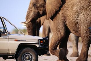 El Rey se va de caza a Botswana con la que está callendo en el país