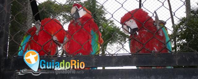 Pássaros do Zoológico do Rio de Janeiro