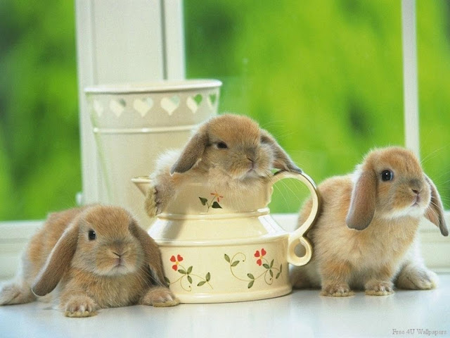 adorable bunny rabbits