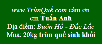 Trùn quế Buôn Hồ, Krông Búk