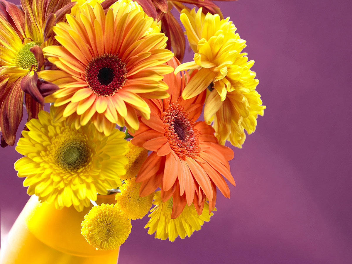 Canada Floral Delivery Blog Fun Facts About Daisies
