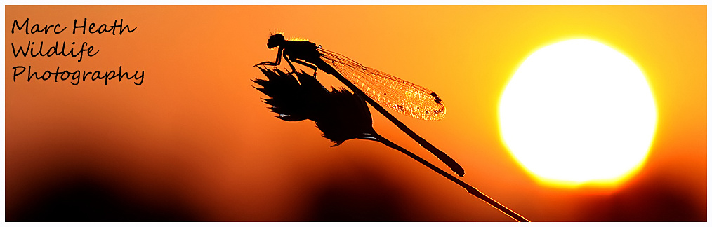 Marc Heath Wildlife Photography