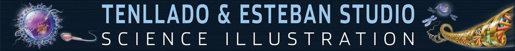 TENLLADO & ESTEBAN STUDIO