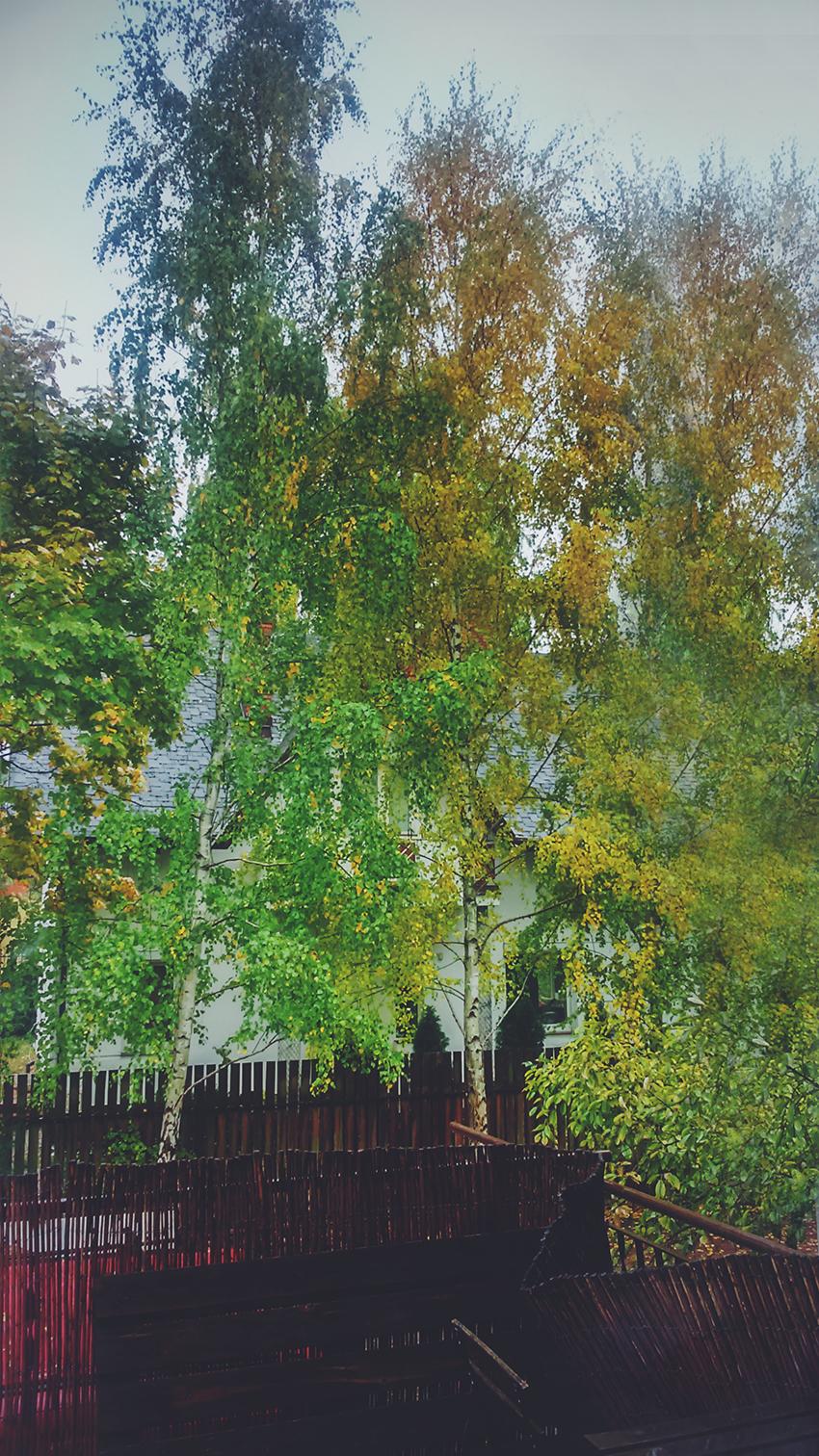 Widok z okna na drzewa jesienią