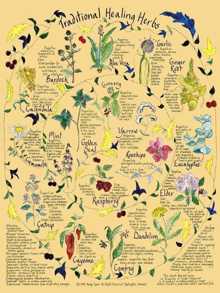 Herbs for healing salve